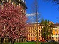 Wiosna w Bielsku-Białej. - panoramio (6).jpg