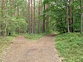 Wolin National Park-path (3).jpg