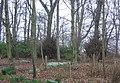 Woodland, Leuchie. - geograph.org.uk - 140732.jpg