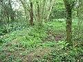 Woods in Broad Lane - geograph.org.uk - 431061.jpg