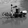 Workhorse pulling a cart through water in Burkina Faso, 2009.jpg