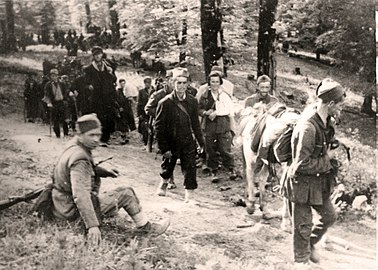 Wounded on Sutjeska.jpg