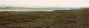 Wrangel Island - Arctic tundra on Wrangel Island