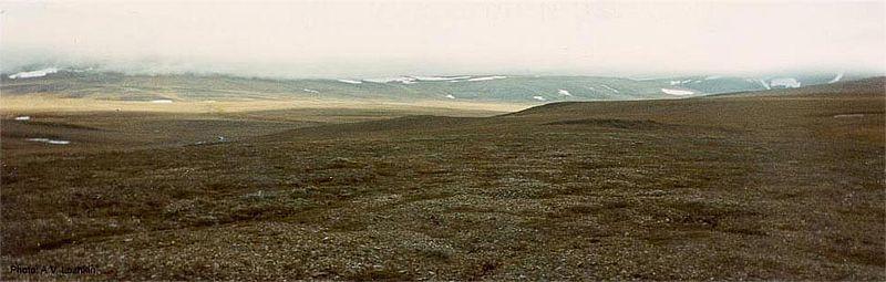 File:Wrangel Island tundra.jpg