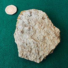 Wren\u0026#39;s Nest - Wikipedia