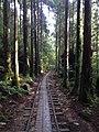 Yakushima forest.jpg