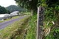 Yamanotarindo01.jpg