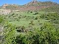 Yarımtepe köyü ( arğat köyü) - panoramio - zazamenaf (6).jpg