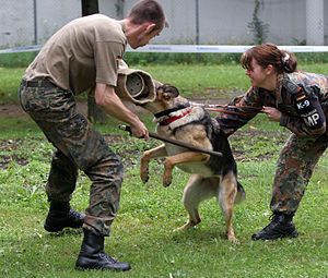 Police dog - Military police dog of the Feldjäger of the German Army.