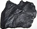 Zaleski Flint (Middle Pennsylvanian; west of Creola, northern Vinton County, Ohio, USA) 22.jpg