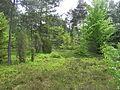 Zielona natura.JPG