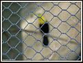 Zoo a prison for animals..jpg