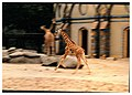 Zoologischer Garten Berlin - Wildlife ^ Zoo Photography - panoramio.jpg