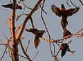 (1)Birds in Kensington Park 095a.jpg