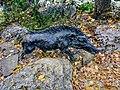 «Фельдман-Екопарк»-регіональний ландшафтний парк у Дергачівському районі Харківської області(16).jpg