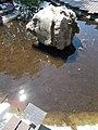 Ábrahámhegy quartzite stone in a small pond of Castle Garden, Keszthely, 2016 Hungary.jpg