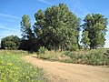 Árboles en Bercianos.jpg