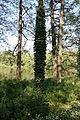 Åbackarna Norrköping 2008-05-10 bild18.jpg