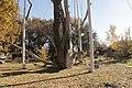 Історико-культурний комплекс 700-річний Запорозький дуб Власне дуб 04.JPG