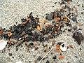 Балтийск. Янтарь на песке - 31-10-2003г. - panoramio.jpg