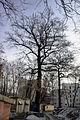 Віковий дуб-красень 06.jpg