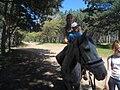 Езда на лошади.jpg