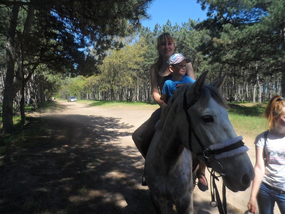Езда на лошади