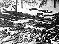 Жертвы в Дарницком концлагере.jpeg