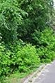 Западная часть парка Нивки. Фото 11.jpg