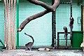 Київський зоопарк Лемури котячі 07.JPG