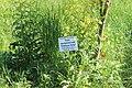 Національний ботанічний сад імені Миколи Гришка НАН України 04.jpg