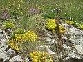 Орхидея и панаска детелина 22.jpg