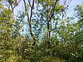 """Парк шума """"Гази Баба"""" 28.jpg"""