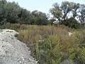 Поселення в передмісті Сурмичі, пункт 2, дюна на правому березі р. Ікви.jpg