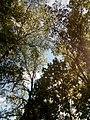 Прилуцький дендропарк Прилуцький район, м. Прилуки, вул. Вавилова, 16 74-107-500 07.jpg