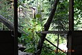 """Природа біля водоспаду Кам""""янка.jpg"""