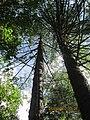 "Природный заповедник - ""KIVACH"" Кивач, Карелия-2012 - panoramio (6).jpg"