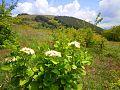 Резерват Острица.jpg