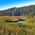 Река Кунгур - panoramio (1).jpg