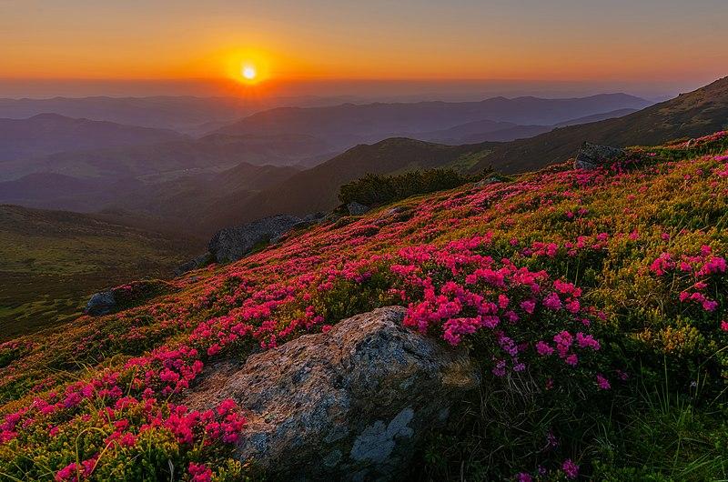 File:Рододендронний світанок на Вухатому Камені.jpg