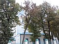 Село Маково, Богородицерождественская церковь. 8.jpg