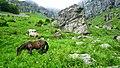 """Стара Планина-околностите на хижа""""Рай"""" - panoramio (1).jpg"""