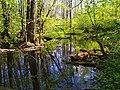 Усманка в заповедном лесу.jpg