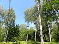 Уфимский лес.JPG