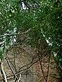Фрагмент замку в Тайкурах DSCF7380.JPG
