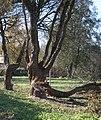 Царникава (Латвия) Убей бобра - спаси дерево - panoramio.jpg