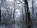 Чернечий Ліс 7.jpg