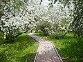Яблоневый сад весной - panoramio.jpg