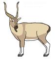 יעל צ'ילטאני (Capra aegagrus chialtanensis) - איור של משתמשמנחם.אל.png