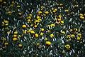 عکس از گلها و گیاهان باغ بوتانیکال تفلیس - گرجستان 11.jpg